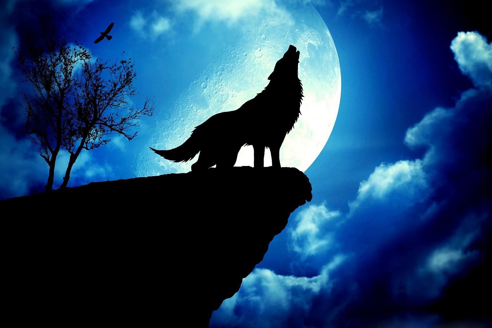 blue moon wolf wallpaper - photo #4